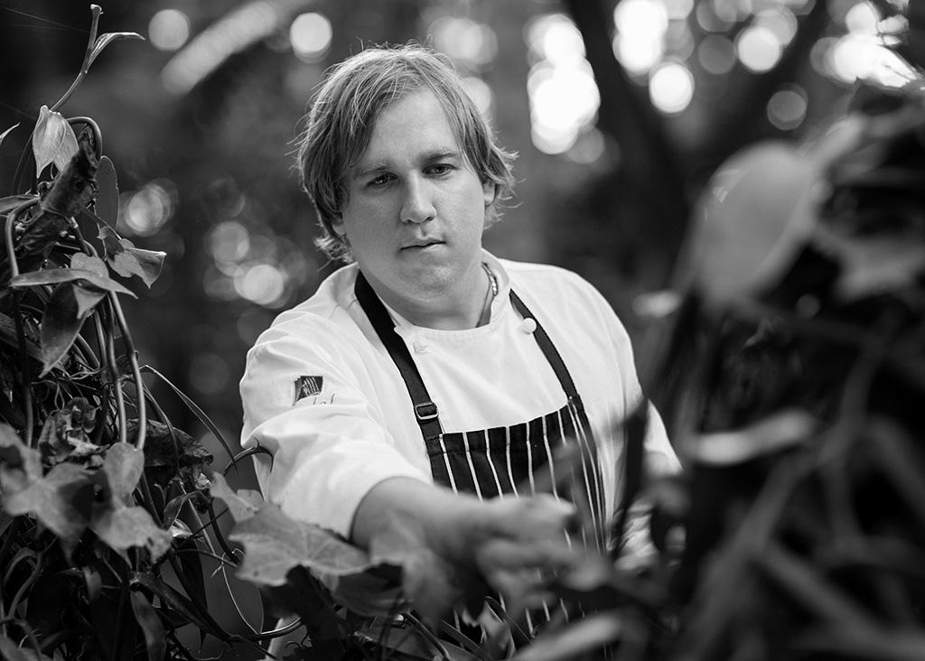 Chef Anthony Healy picking vanilla beans - black and white photo